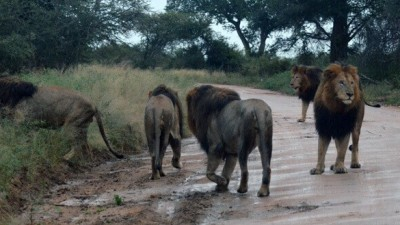 Kruger National Park by African Tracks 4x4 Car Hire